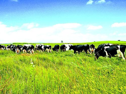 milk-dairy-wellgreen
