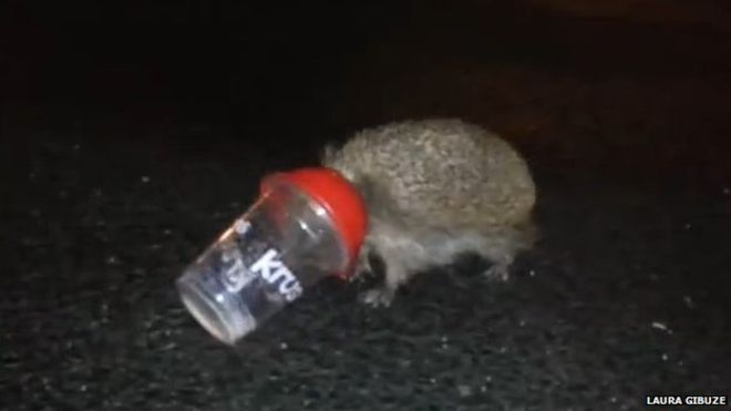 KFC said it would introduce smaller lids to help stop hedgehogs getting stuck in the packaging