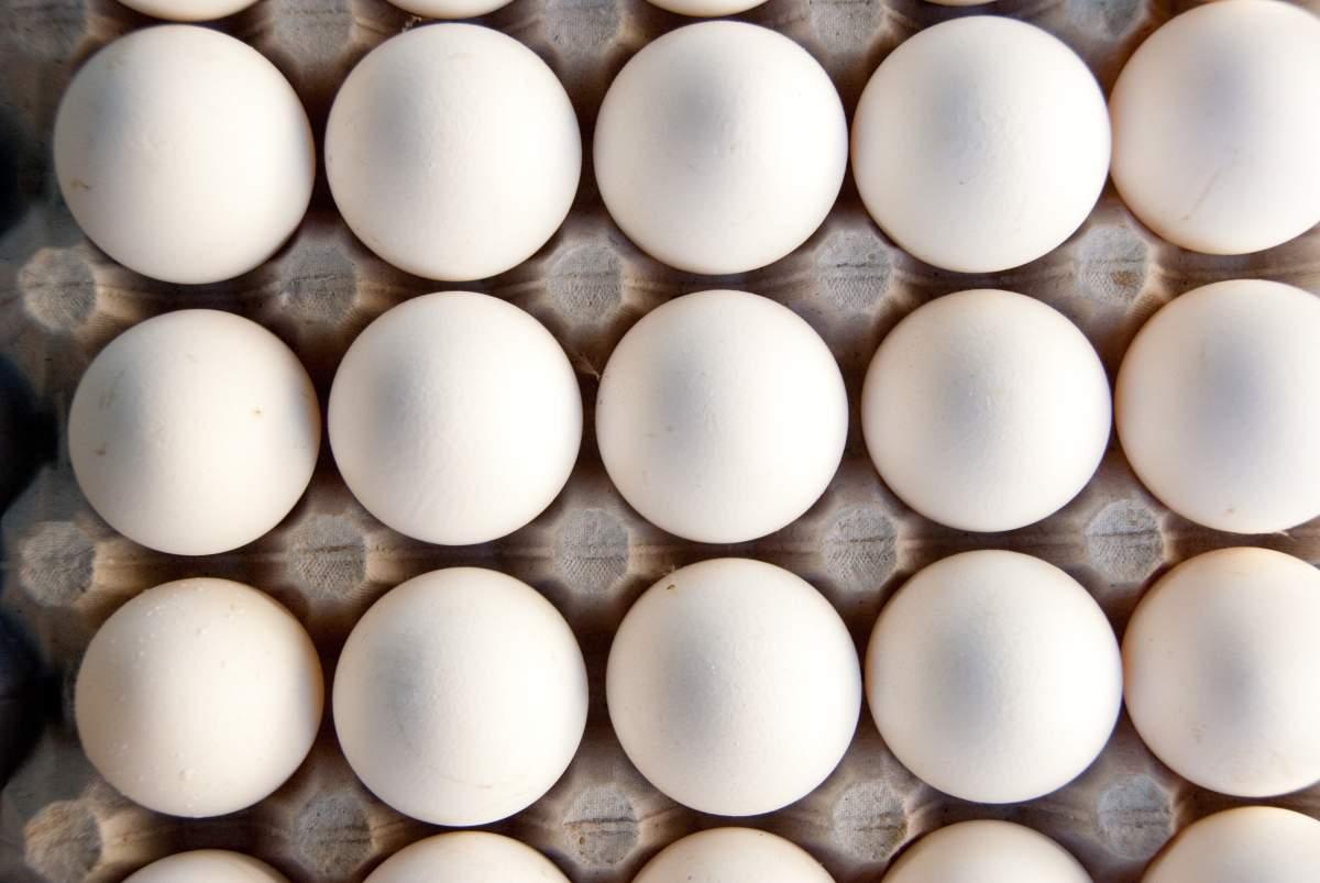 egg-wellgreen